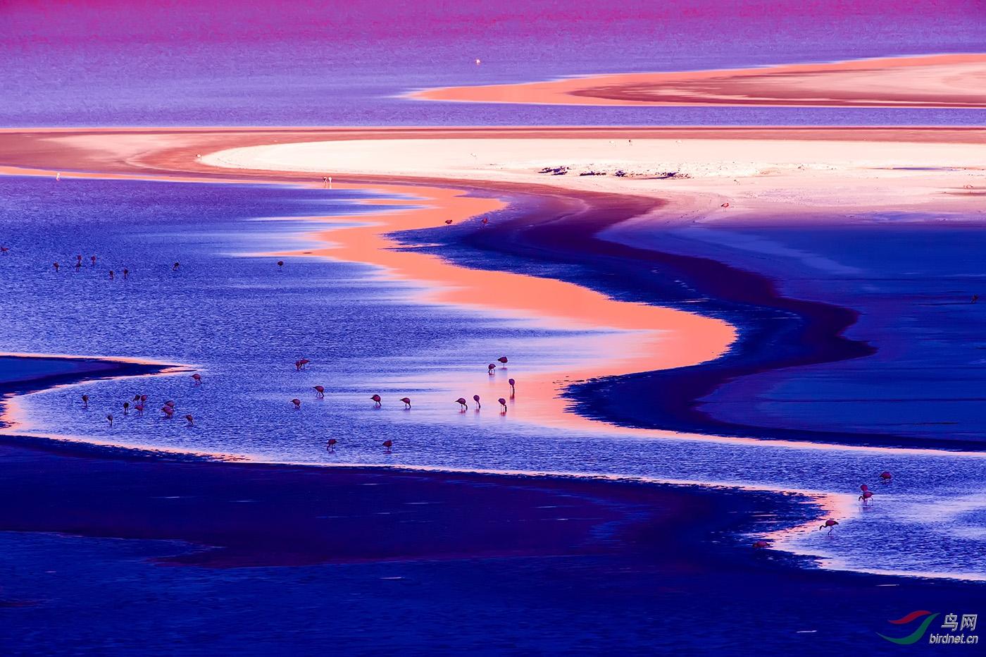 2015年11月玻利维亚红湖滩《觅食》.jpg