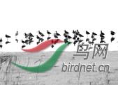浙江.png