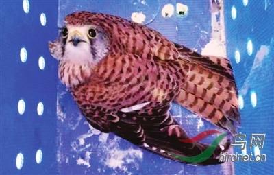 红鸟.jpg