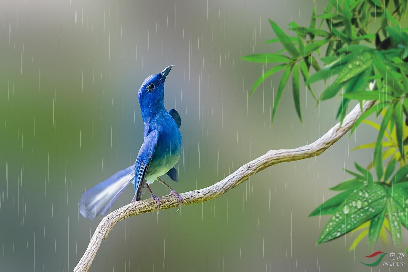 0161.雨中求情.jpg