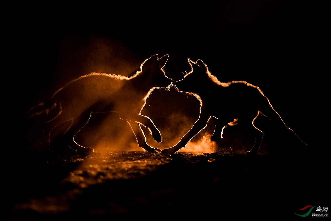 夜行者wxyAuthentic_Wildlife_Dust_Bath.jpg
