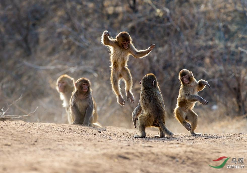 -0725.猴舞春天.jpg