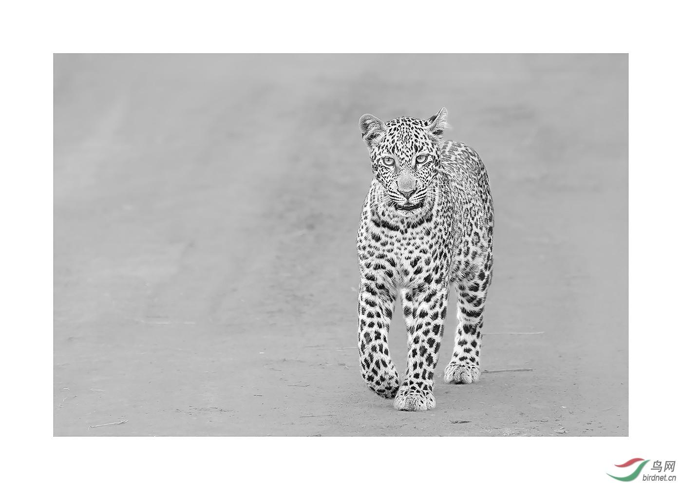 r-入围-0169.一只花豹wxy123-pic-5b8eddcfed12d.jpg