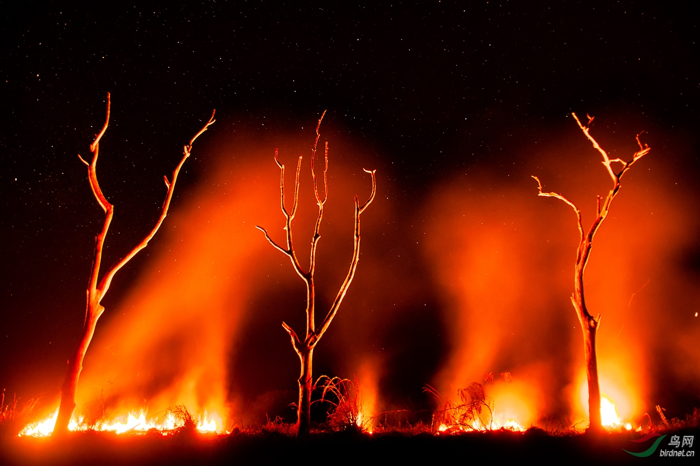 银花wxyLandscape_Nature_Forest_Fire.jpg