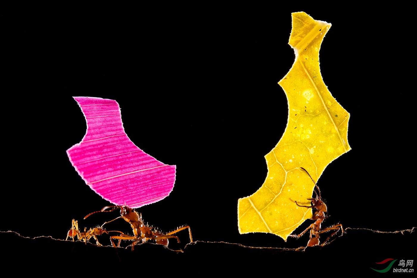 紫黄色wxyPictorial_Fragments.jpg
