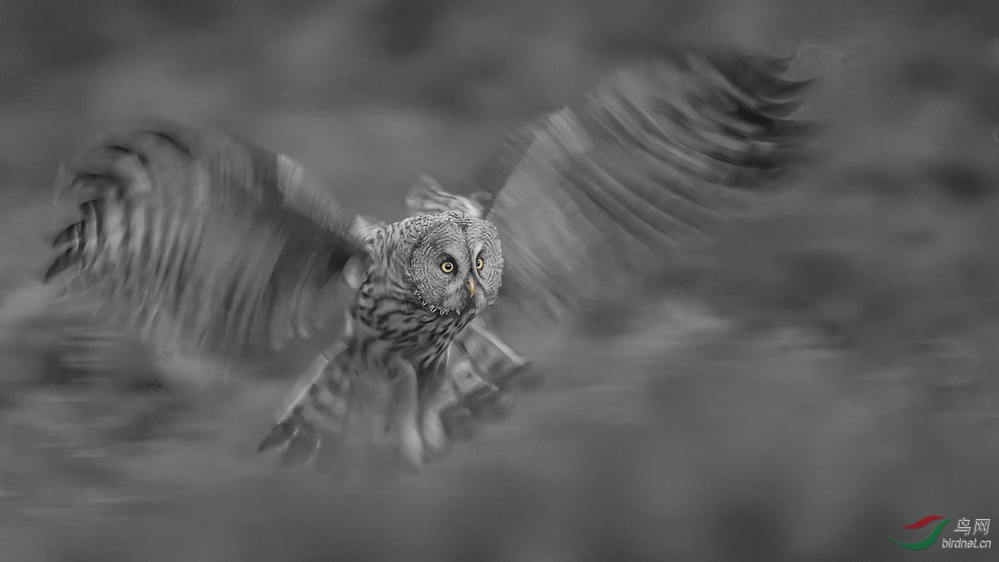 ._夜行动物乌林鸮_艺术(画意)摄影.jpg