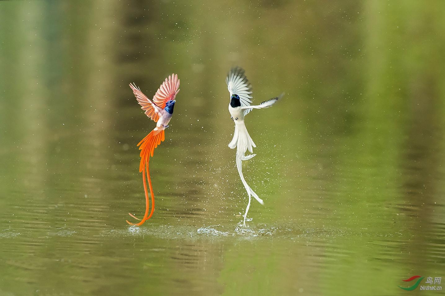 .双人舞.jpg