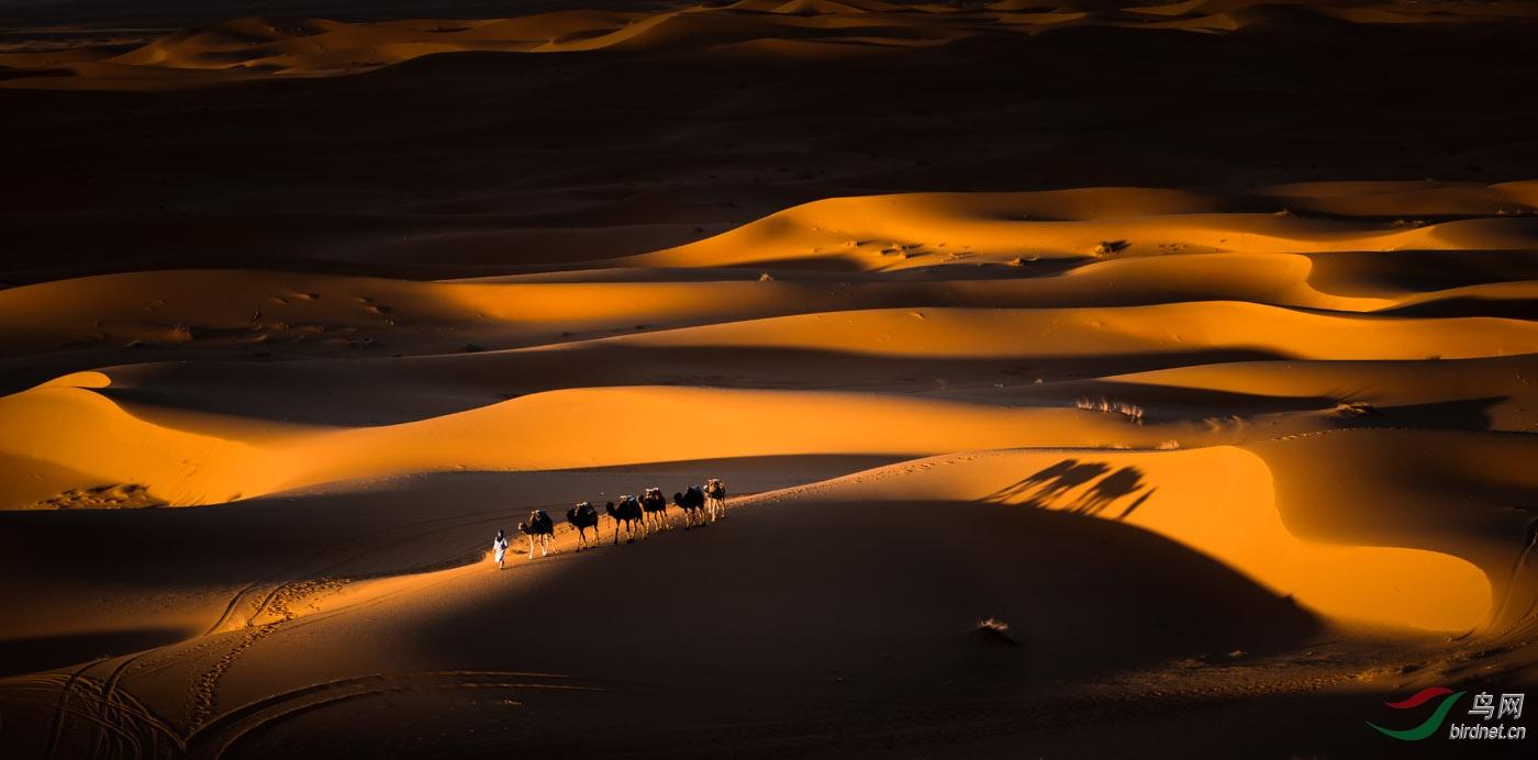 002.大漠驼影.jpg