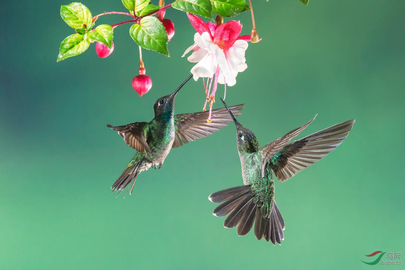 鸟舞翩跹.jpg