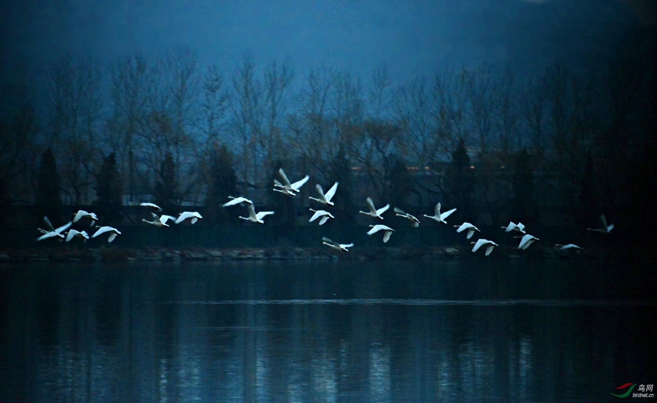 天鹅湖-5.jpg