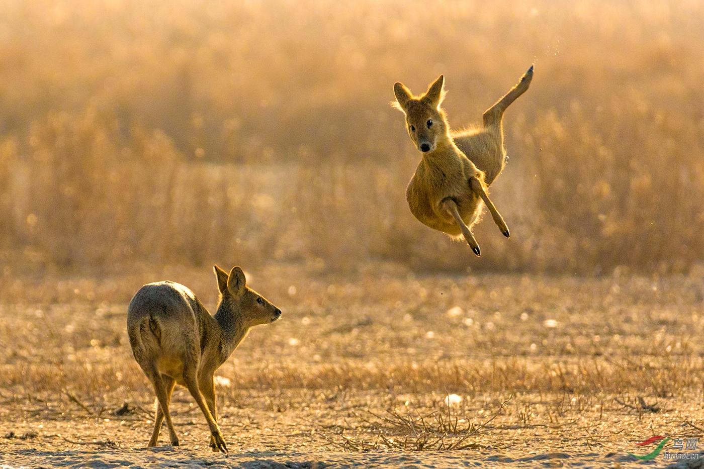 看我跳得有多高_真实野生动物.jpg