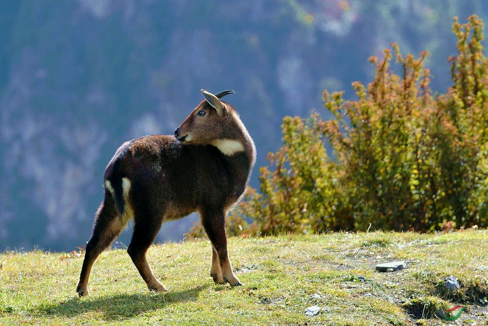 国际野生生物保护学会(wildlife conservation society),野生动物救援