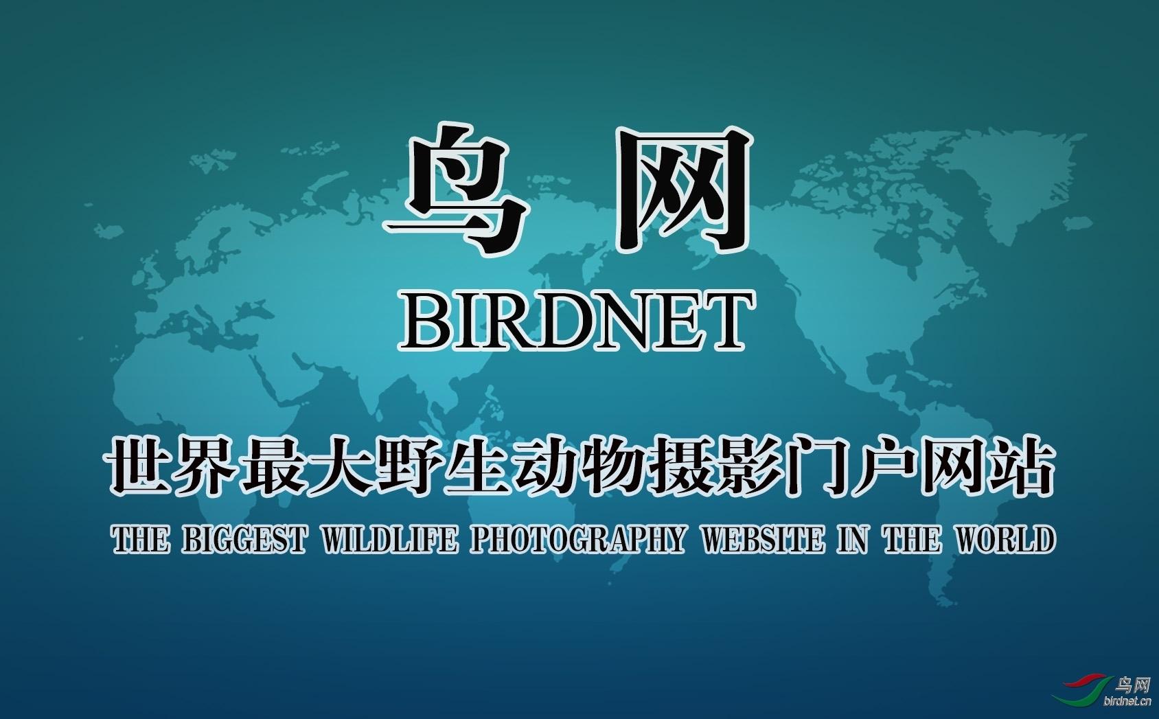 中国鸟网2018年年会视频