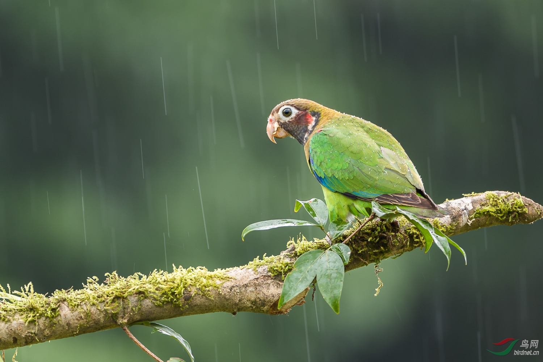 雨中.jpg