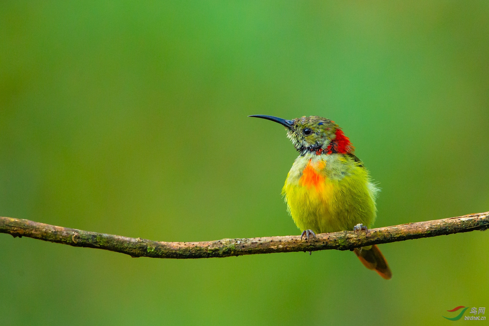 壁纸 动物 鸟 鸟类 雀 摄影 小鸟 桌面 1600_1067