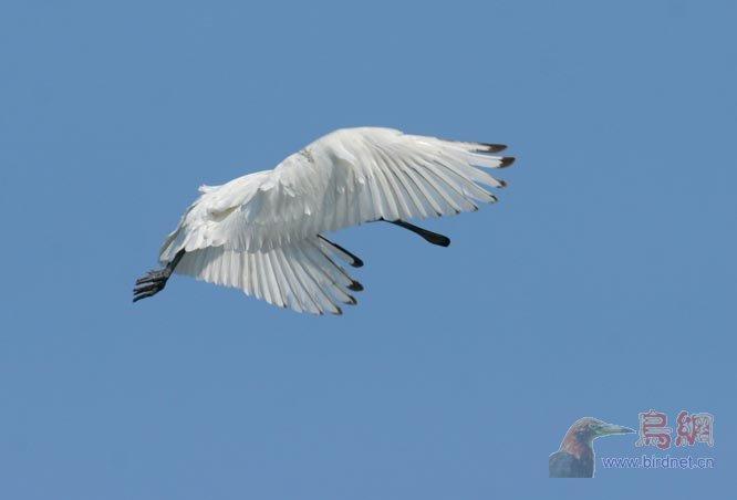 飞行动物翅膀分解图