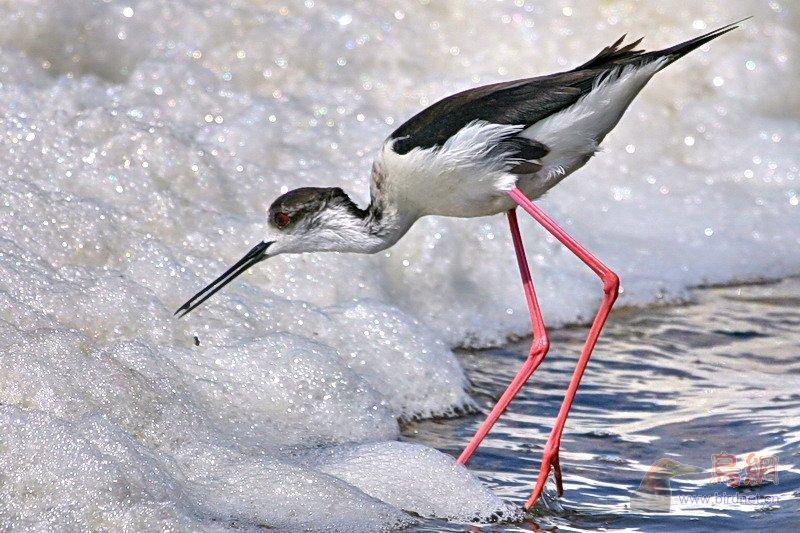 长腿动物简笔画