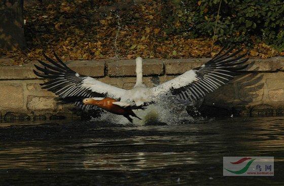 [原创]北京动物园水禽湖一日