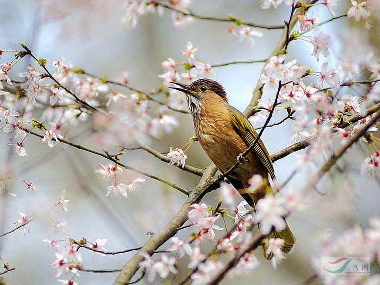 鸟图片大全可爱