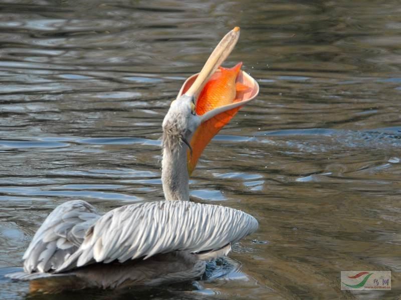 动物 鸟类 摄影 800