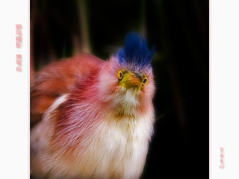 祝新利生日快乐 - 鸟网文化 Birdnet Culture 鸟网