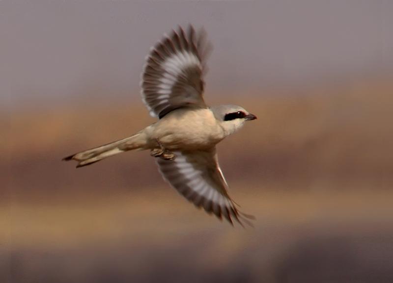 自由飞翔 - 观鸟拍鸟之旅