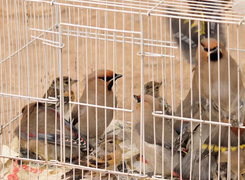 3月15日十三陵拍鸟 1345.jpg