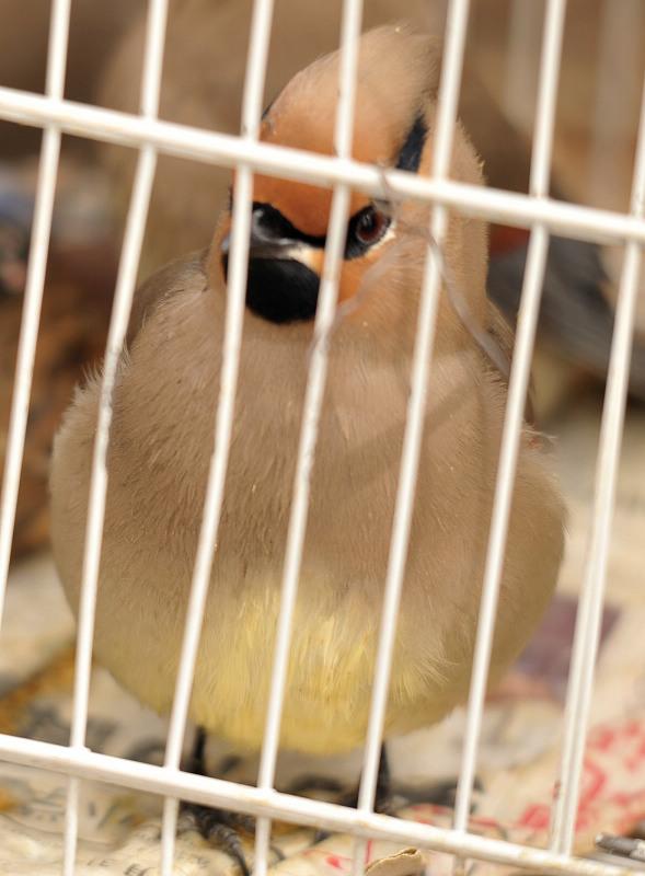 3月15日十三陵拍鸟 1394.jpg