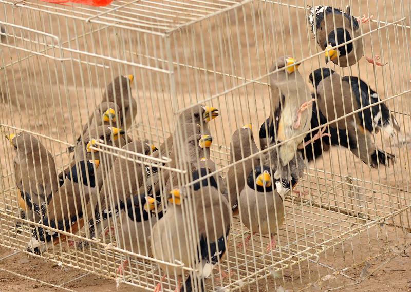 3月15日十三陵拍鸟 1342.jpg