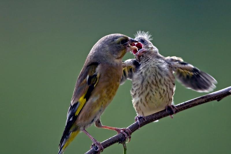 """母爱伟大,妈妈的""""吻"""""""