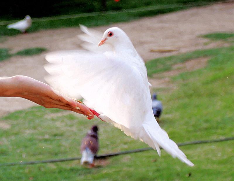 灭绝动物集天使