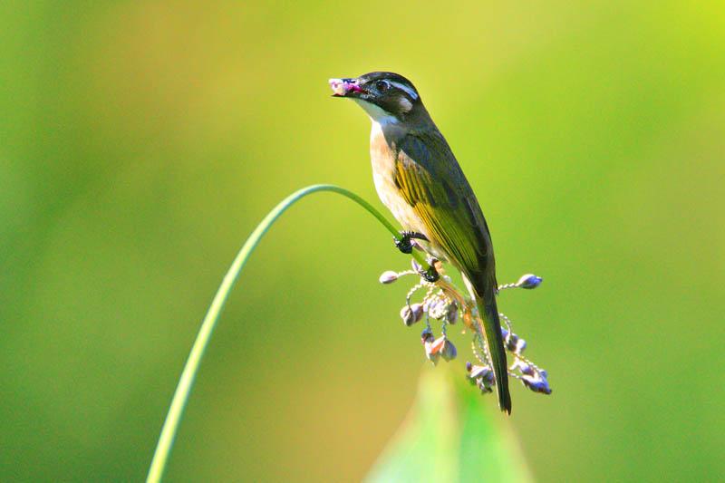 林中小鸟 22幅 Forest Birds