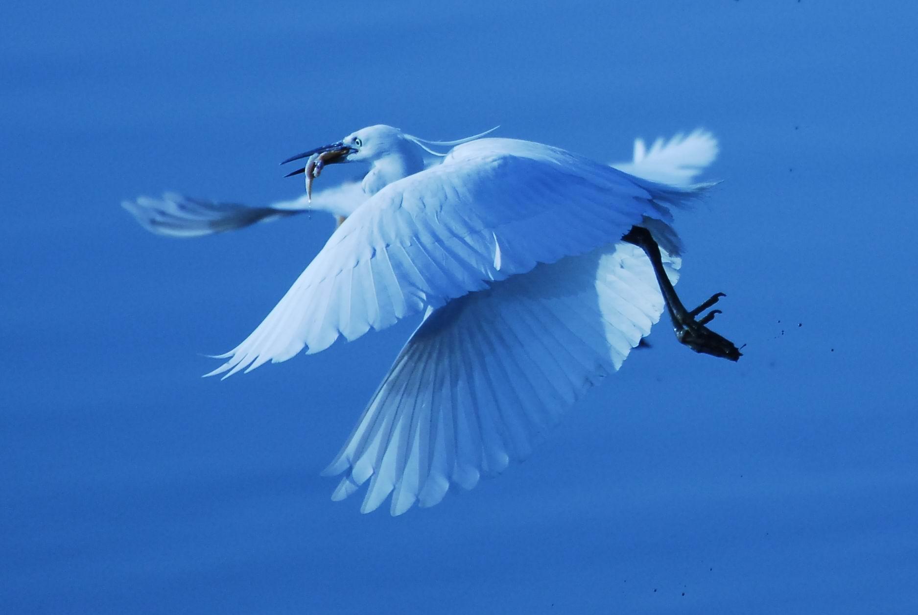 浅蓝色欧式壁纸贴图鸟