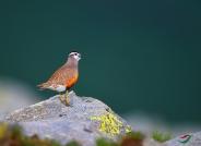 鸟网会员个人图库鸟种数量大排行