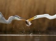 """""""池杉湖杯""""2018国际自然与风光摄影大赛【真实野生鸟类】入围作品公示"""