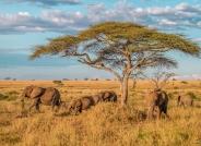 非洲草原上的大象(恭贺老师佳作荣获首页精华! )