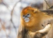 祝贺鸟网年会顺利召开!(获首页动物精华)