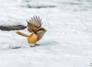 欣喜遍地雪,欢呼年会开