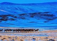 藏野驴(荣获每日一图)