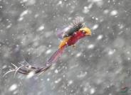 猛烈祝贺鸟网北京新年团拜会圆满成功!(祝贺荣获首页创意精华及本版佳作)