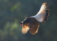 褐马鸡--恭贺荣获首页鸟类精华
