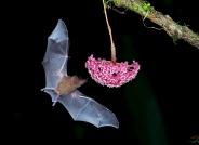 祝老师们冬日快乐!----食蜜蝙蝠