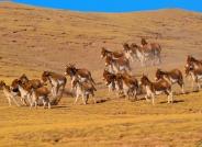 勇闯无人区―世界第三极野生动物拍摄札记(荣获每日一图)