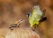 领地之争(祝贺荣获首页鸟类精华)