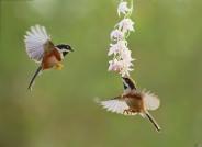 小鸟儿也爱花