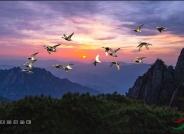 创意 天高任鸟飞