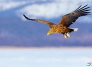 飞翔的翅膀