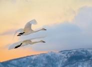 自由的飞翔(祝贺荣获首页鸟类精华)