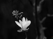 枯木逢春------祝贺荣获黑白影像华盈彩票精华!