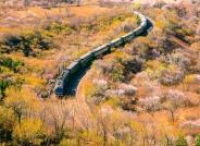 穿越花海的列车